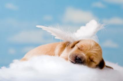 """Sleeping Angel"""