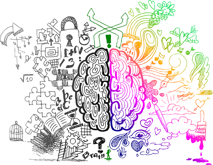 The traditional functions of the two halves of the brain
